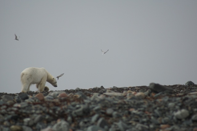single polar